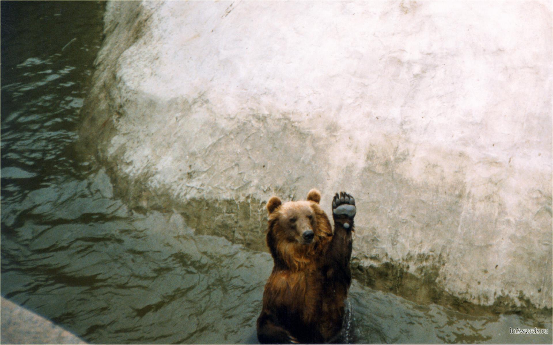 Приветливый медведь машет лапой