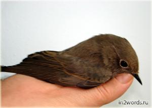 Виноградная птица счастья в добрых руках