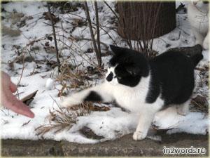 Кошки тоже лапу дают, Вы знали?