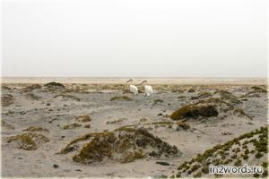 Хищные чайки, агрессивные розовые пеликаны и волны на побережье Волвис Бэй (Walvis Bay), Намибия.
