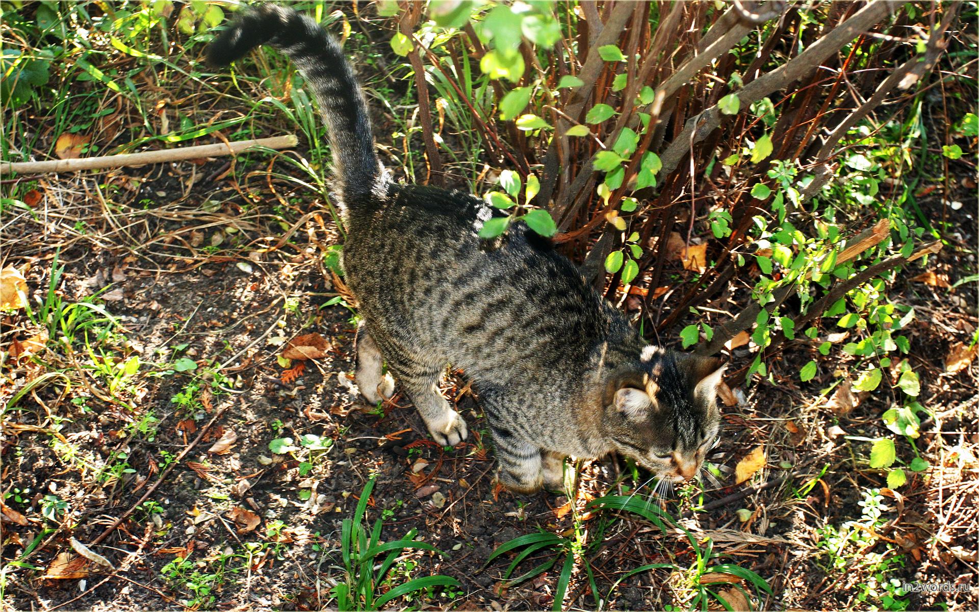 Из леса их вышло двое - серый красавчик кот и его тень.